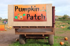 Pumpkin Picking in Somerset | A Halloween Day Out At Farringtons Farm