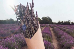 Somerset Lavender Fields | A Magical Afternoon In The Countryside