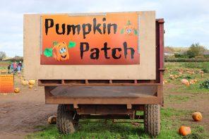 pumpkin picking in somerset